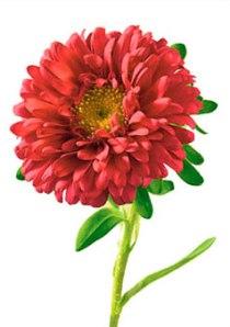 Aster, September's birth flower
